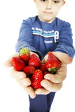 Child's hands holding strawberries. A child's hands holding fresh picked organic strawberries Stock Photos