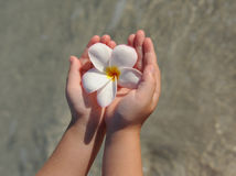 Child's hands holding a tropical flower on beach Royalty Free Stock Photos
