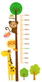 The child`s height illustrations Stock Photo