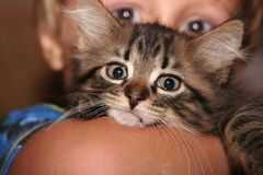 Child's kitten. Poor little kitty being held by a 3 year old Royalty Free Stock Photo