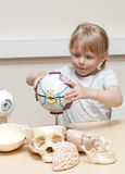 Child scientist. Cute litte girl (5 years old) playing with anatomical models of human eyes, brains and skulls Stock Photography