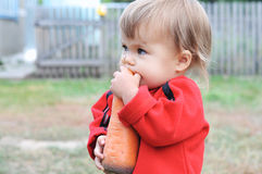 Child scrunching carrot outdoor Royalty Free Stock Photos