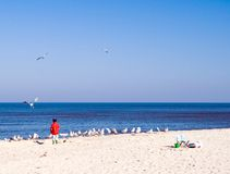 Child and sea gulls. A child on a beach, looking at the sea gulls, clear blue sky, empty horizon Royalty Free Stock Photos
