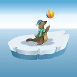 Child seals. And ball, iceberg Stock Photos