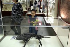 The child sees the ancient fossils. Royalty Free Stock Image