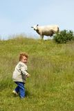 Child and Sheep. Little dutch boy (3) climbing the grassy dike while a sheep on top is watching him Stock Images