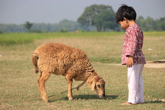 Child and sheep is in the filed. Royalty Free Stock Image