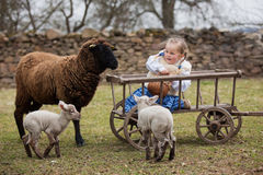 Child and sheeps Royalty Free Stock Images
