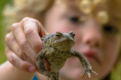 Child showing a Common toad Royalty Free Stock Photos