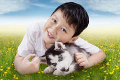 Child and siberian husky puppy at field Stock Images