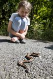 Child siting close of poison snake. Viper stock photo