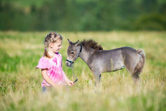 Child with a small miniature horse in field stock photography