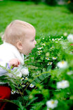 Child smelling camomiles. Pretty child smelling bush with camomiles with open mouth royalty free stock images