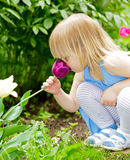 Child smelling flower Stock Photography