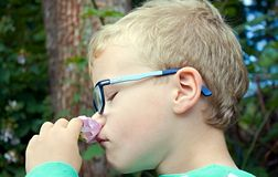 Child smelling flower royalty free stock photography