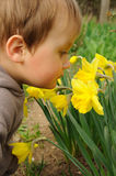 Child smelling flowers. Little child smelling yellow flowers in a garden royalty free stock photography