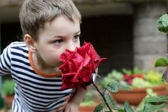 Free Child Smelling Rose Stock Image - 74346271