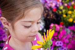 Child smelling Sunflower royalty free stock photography