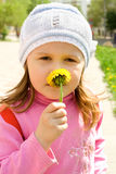 Child smells dandelion Stock Images