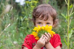 Child sniffs sunflower Royalty Free Stock Images