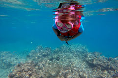 Child snorkeling dive over a coral reef stock image