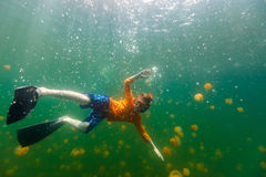 Child snorkeling in Jellyfish Lake. Underwater photo of tourist child snorkeling with endemic stingless jellyfish in lake at Palau. Snorkeling in Jellyfish Lake Stock Photos