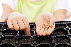 Child sowing seeds into germination tray. Closeup on hands Royalty Free Stock Images