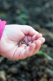 Child sowing seeds of radish Royalty Free Stock Images