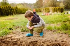 Child sowing vegetables in the home garden. Royalty Free Stock Image