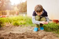 Child sowing vegetables in the home garden. Stock Image