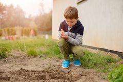 Child sowing vegetables in the home garden. Royalty Free Stock Photography