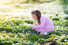 Child in spring park with flowers. Cute little girl in pink dress playing in blooming spring park with first white wild anemone flowers. Child on Easter egg hunt Royalty Free Stock Photo