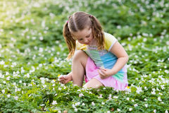 Child in spring park with flowers. Cute little girl in pink dress playing in blooming spring park with first white wild anemone flowers. Child on Easter egg hunt Royalty Free Stock Photography