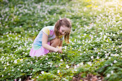 Child in spring park with flowers. Cute little girl in pink dress playing in blooming spring park with first white wild anemone flowers. Child on Easter egg hunt Stock Photo
