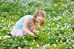 Child in spring park with flowers. Cute little girl in pink dress playing in blooming spring park with first white wild anemone flowers. Child on Easter egg hunt Stock Image