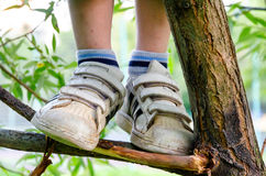 Child standing on a dry branch Stock Image