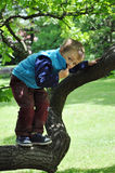 Child standing on tree branch Stock Image