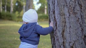 Child stands near a tree and touch it. Tears bark. Outdoor stock footage