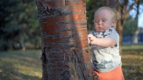 Child stands near a tree and touch it. Tears bark. Outdoor stock video footage