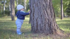 Child stands near a tree and touch it. Tears bark. Outdoor stock video