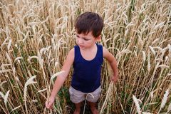 The child stands among the wheat field stock photos