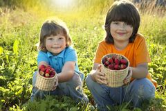 Child with strawberries sunny garden with a summer day.  Stock Image