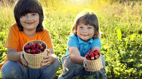 Child with strawberries sunny garden with a summer day.  royalty free stock photos