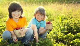 Child with strawberries sunny garden with a summer day stock photo