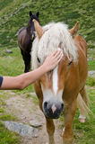 Child stroking the mane of a horse Royalty Free Stock Images