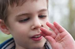 Child studies the ladybug Royalty Free Stock Photo