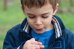 Child studies the ladybug Stock Photography