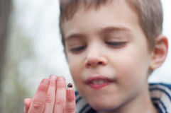 Child studies the ladybug Stock Photos