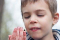 Child studies the ladybug Stock Photos