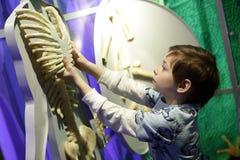 Child studying human anatomy Royalty Free Stock Image
